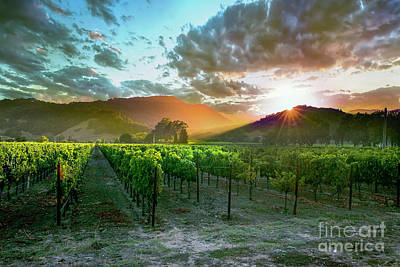 Red Photograph - Wine Country by Jon Neidert