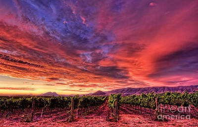Photograph - Wine Country Sunset by Beth Sargent