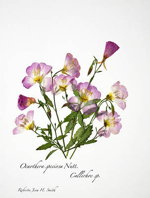 Photograph - Wine-cup And Primrose by Roberta Jean Smith
