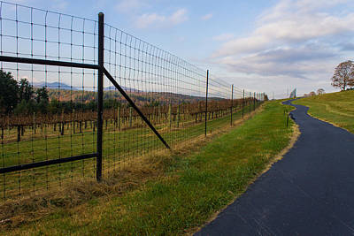 Photograph - Wine Fields by Michael Tesar