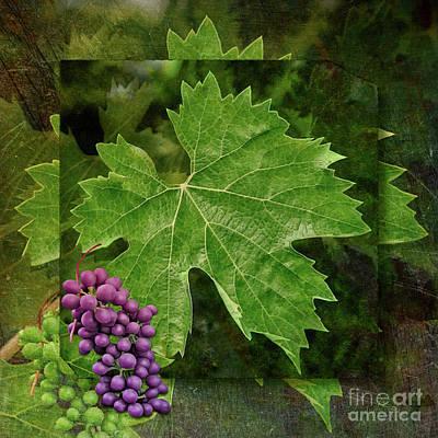 Photograph - Wine Grapes And Leaves by Gabriele Pomykaj