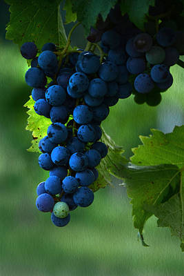 Blue Grapes Photograph - Wine Grapes by Ann Bridges