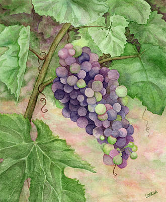 Wine Country Watercolor Painting - Wine Grapes by Lorrisa Dussault