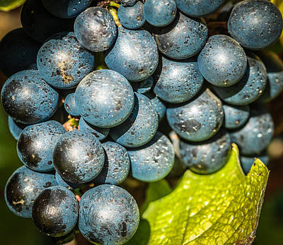 Winemaking Digital Art - Wine Grapes by Optical Playground By MP Ray
