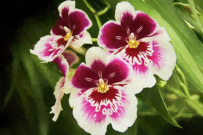 Photograph - Wine Orchids- The Risen Lord by Penny Lisowski