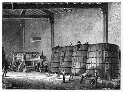 Wine Production, 19th Century Art Print by Cci Archives