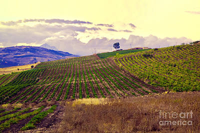 Wine Vineyard Photograph - Wine Vineyard In Sicily by Madeline Ellis
