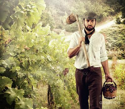 Winegrower While Harvest Grapes Art Print by Antonio Gravante