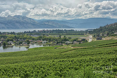 Photograph - Winery View by Patricia Hofmeester