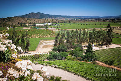 Vineyard View With Roses, Winery In Casablanca, Chile Art Print