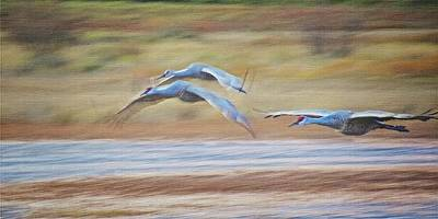 Photograph - Wing Beats, Sandhill Cranes by Flying Z Photography by Zayne Diamond