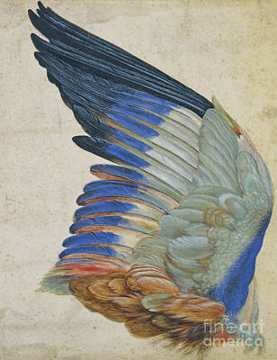 Vellum Painting - Wing Of A Blue Roller by Hans Hoffmann
