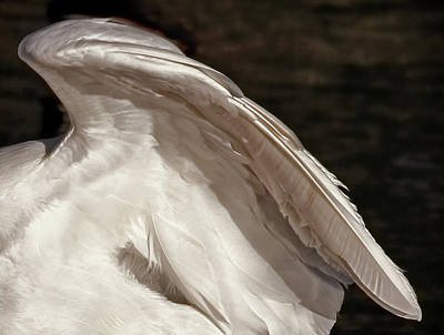 Photograph - Wing Of An Egret by Jennie Marie Schell