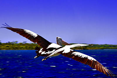 Photograph - Wing Span Of Pelican And Seagull by Miroslava Jurcik