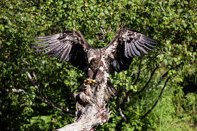 Photograph - Wing Span Of The Eagle by Gloria Anderson