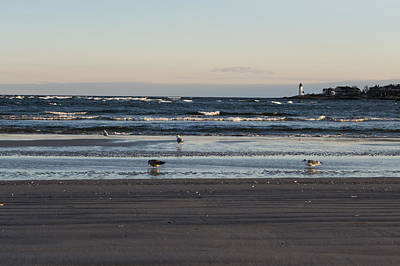 Wingaersheek Beach Seagulls At Sunrise Art Print