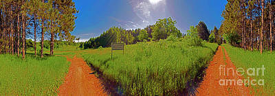 Photograph - Wingate, Prairie, Pines Trail by Tom Jelen