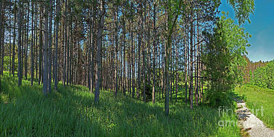 Photograph - Wingate Prairie Veteran Acres Park Pines Crystal Lake Il by Tom Jelen