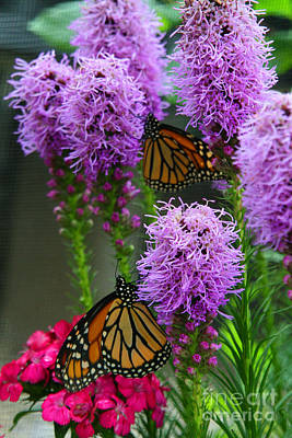 Photograph - Winged Beauties by Crystal Nederman