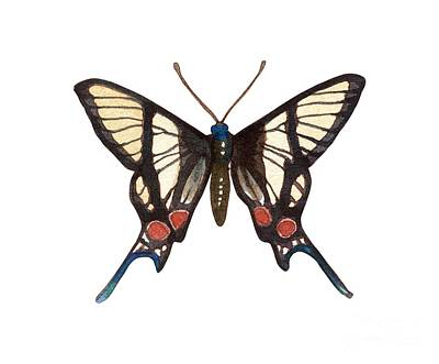 Painting - Winged Jewels 4, Watercolor Tropical Butterflie Black White Red Spots by Audrey Jeanne Roberts