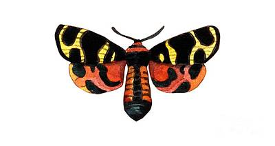 Painting - Winged Jewels 5, Watercolor Moth Black Yellow Orange And Red Tropical by Audrey Jeanne Roberts