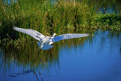Photograph - Winged Retreat by Lynn Bauer