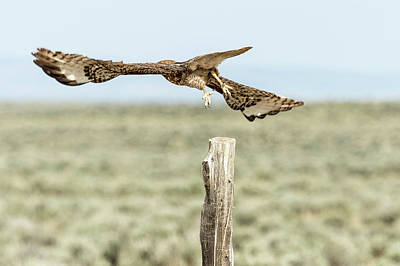 Photograph - Winging It by Belinda Greb