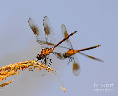 Dragon Fly Photograph - Wingman by Robert Frederick