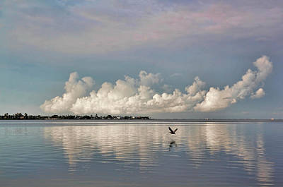 Photograph - Wings Across The Bay 2 by HH Photography of Florida