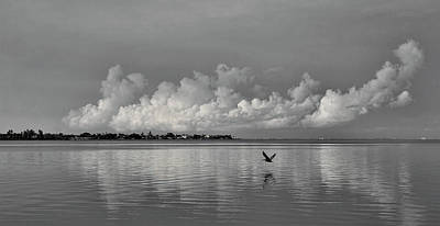 Photograph - Wings Across The Bay by HH Photography of Florida