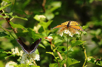 Photograph - Wings And Blooms by Debbie Oppermann