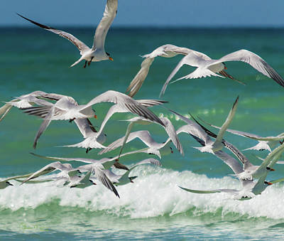 Photograph - Wings And Waves 1 by Susan Molnar