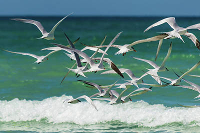 Photograph - Wings And Waves 2 by Susan Molnar