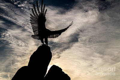 Photograph - Wings At Dawn by William Norton