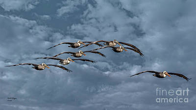 Photograph - Wings In Formation by Bill And Deb Hayes