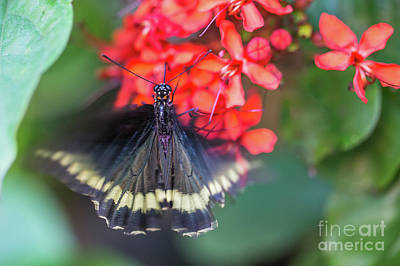 Photograph - Wings In Motion by Eva Lechner