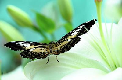 Photograph - Wings by Jenny Rainbow