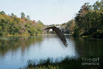 Photograph - Wings Like Eagles by Sandra Clark