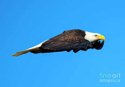 Eagle Photograph - Wings by Mike Dawson