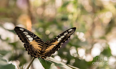 Photograph - Wings Of A Butterfly by Bianca Nadeau