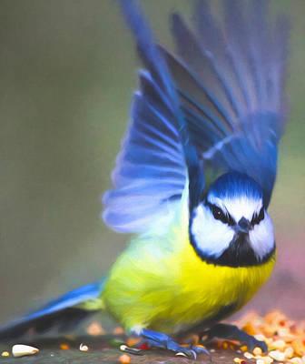 Photograph - Wings Of Blue by Georgiana Romanovna