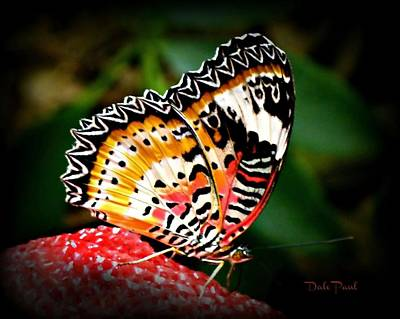 Photograph - Wings Of Color by Dale Paul