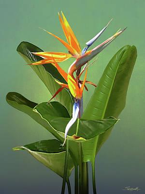 Digital Art - Wings Of Color by M Spadecaller