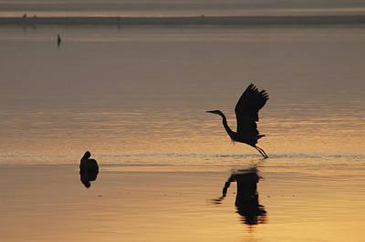 Photograph - Wings Of Dawn by Robert Banach