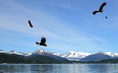 Photograph - Wings Of Eagles In Juneau Alaska by Judy Wanamaker