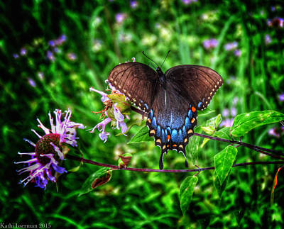 Photograph - Wings Of Fancy by Kathi Isserman