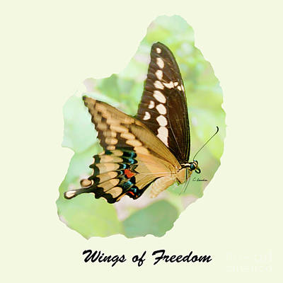 Photograph - Wings Of Freedom By Claudia Ellis by Claudia Ellis