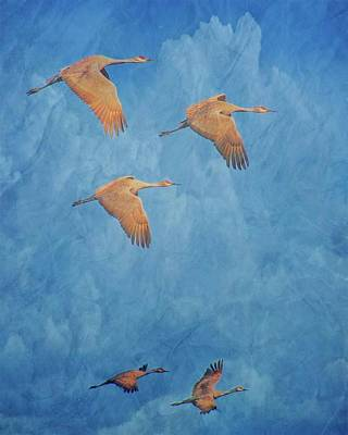 Photograph - Wings Of The Ancient, Sandhill Cranes by Flying Z Photography by Zayne Diamond