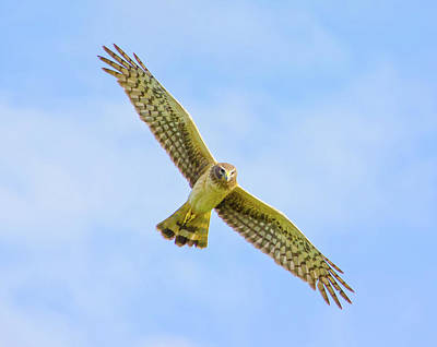 Beauty Mark Photograph - Wings Of The Raptor by Mark Andrew Thomas