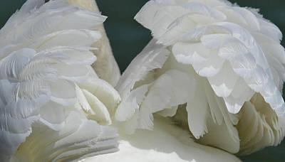 Photograph - Wings Of White by Nadalyn Larsen